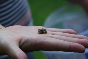Pocket frog by ringette-and-riding
