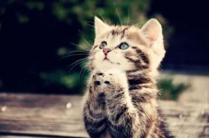 Pray from a cat by 491397560