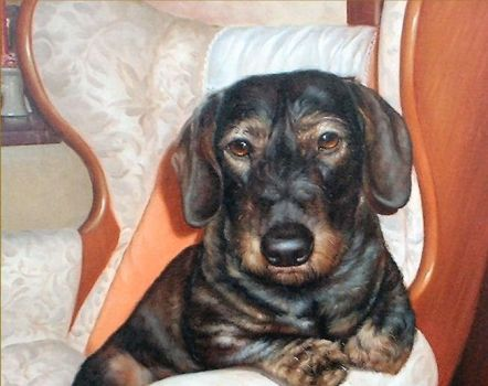 Digby-the-dachshund-wire-haired by JohnAllsopp