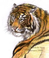 Sketch Tiger by Atan