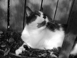 Gizmo in black and white by southoffebruary