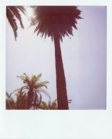 Echo Park Palms by margotdent