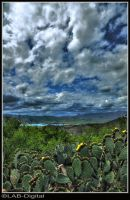 Cactus Blossom View by roodpa