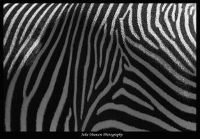 Patterns in Nature by I-Heart-Photos