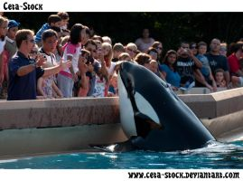 Orca and Trainer 2 by Ceta-Stock