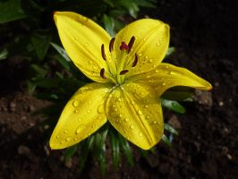 Lilly 4 by friartuck40