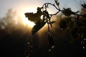 Backlit leaves by crimsonpenguin