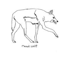 Maned Wolf by coolsarahkry