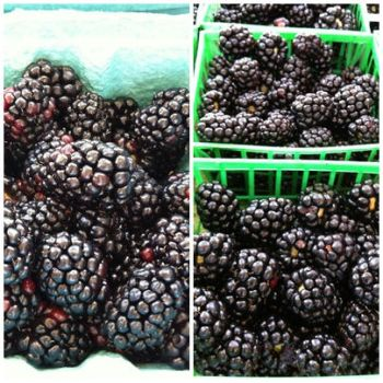 Blackberries by LoveandConfections
