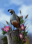 Quail and Wild Roses by ChuckRondeau