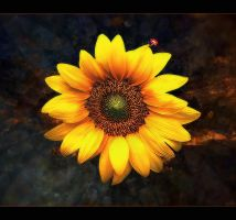 My Sunshine for You ... by tasa78
