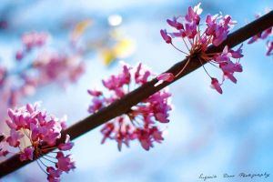 Pink blossom II 123_366 by eugene-dune