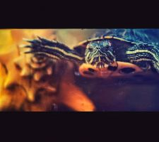 thing about turtle by lafaette