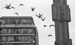 urbanbirds by Mister-Y
