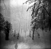 Holga 71 by xxlogre