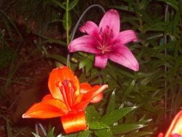Orange and Pink Flowers by cheyxlove