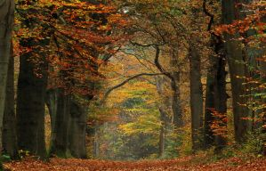 Autumn 2011 at its best by jchanders
