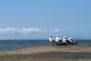 Gulls on Brighton by gorkath