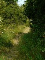 Path 6 by YsaeddaStock