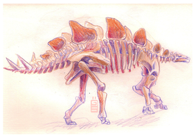 Stegosaurus Skeleton by griffsnuff