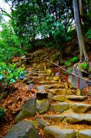 Zojo-ji Path by Nature-And-Things