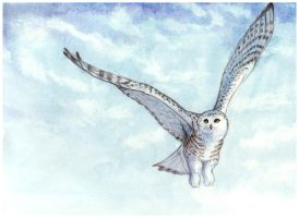 Snowy Owl SpeedPainting by Art-of-Sekhmet