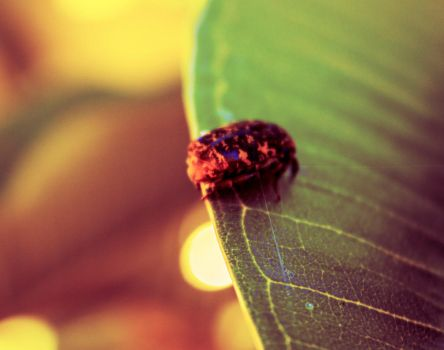 Insect on leaf by IamaDuck7