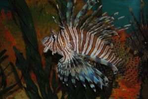 Lion Fish by fluffylink