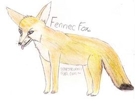 Fennec Fox .x. by starstruckk1