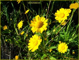 I hate yellow and green by curtition