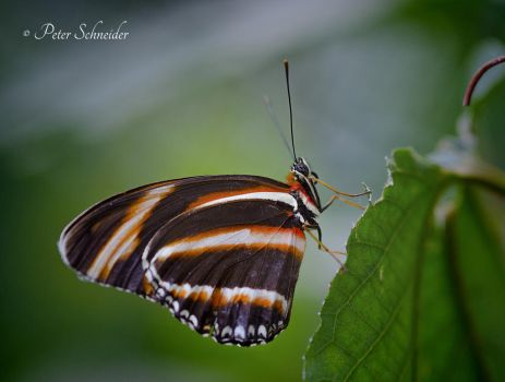 Colored wings. by Phototubby