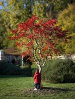 Red boy under red tree by WTek79