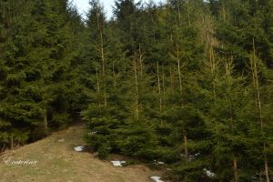 beskidy APRIL '12 - end of the trip by Ecaterina13