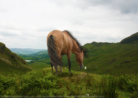 Wild Winds of Cumbria by Kaylied-Estal