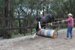 Buddy 5 by ForTheLoveOfAHorse