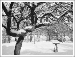 Snow garden - Jan 2006 by pearwood