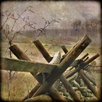 divided at gettysburg by Moon-Willow