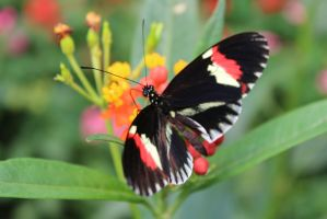 London Zoo 1 Butterfly by Evely-Hollen