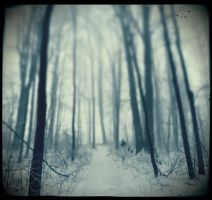 Dark Forest by DilekGenc
