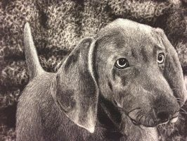 Scratchboard of Dog by UnseenCatalyst