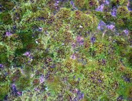 Stock Texture - Chemical Works Moss by rockgem