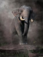 Elephant by deskridge