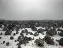 Powdered Trees Contrast by cdooginz