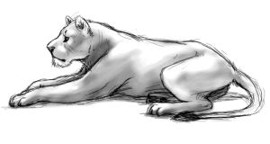 Lioness doodle by Feyrah