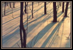 Winter Shadows by kessalia