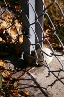 Chain link Fence and Baseball by RebekahByland