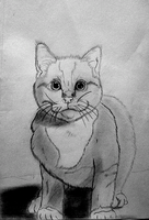 Weekly Drawing 09: Cat by McKravendrawings