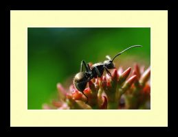 Ant Photo 6 by blookz