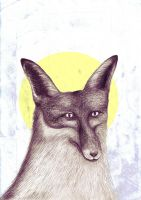 black fox with golden circle by trzytrzy