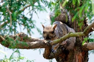 Killer Squirrel by mairlin